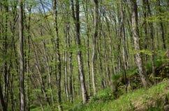 Forêt verte avec les arbres et l'herbe photographie stock