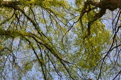 Forêt verte avec les arbres et l'herbe images stock