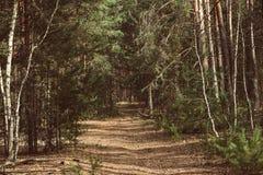Forêt verte d'été Images stock