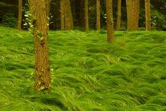 Forêt verte d'été Photo libre de droits