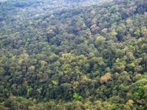 Forêt verte d'une taille photos stock