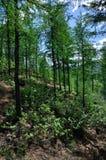 Forêt verte dans le nord Photo stock