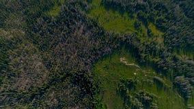 Forêt verte de l'Idaho et montagne rocheuse comme vu du ciel clips vidéos