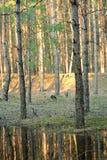 Forêt verte de ressort dans des rayons du soleil Photo stock