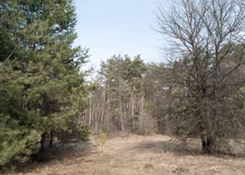 Forêt verte de ressort dans des rayons du soleil photographie stock libre de droits