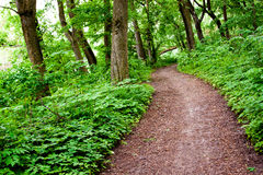 Forêt verte de ressort Photos stock