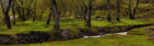 Forêt verte de source Photographie stock