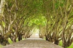 Forêt verte de tunnel avec la manière de chemin Photo libre de droits