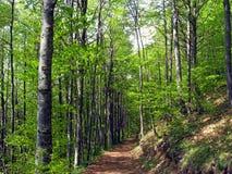 Forêt verte dense images libres de droits
