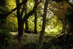Forêt verte en bois Photos stock