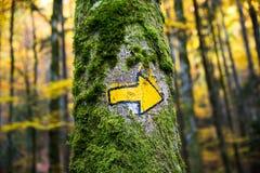 Forêt verte et jaune de sentier de randonnée de connexion peint à la main de flèche photo libre de droits
