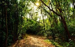 Forêt verte et lumière brillante Photographie stock libre de droits