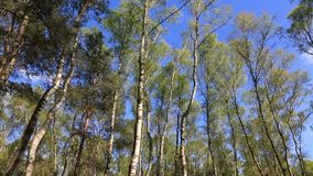 Forêt verte clips vidéos