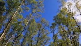 Forêt verte banque de vidéos