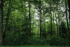 Forêt verte luxuriante profonde de Washington images libres de droits