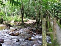 Forêt verte naturelle chez Ulu Yam Selangor Malaysia images stock