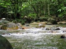 Forêt verte naturelle chez Ulu Yam Selangor Malaysia photo stock