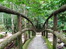 Forêt verte naturelle chez Ulu Yam Selangor Malaysia images libres de droits