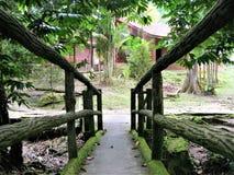Forêt verte naturelle chez Ulu Yam Selangor Malaysia photographie stock