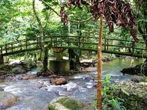 Forêt verte naturelle chez Ulu Yam Selangor Malaysia photos stock