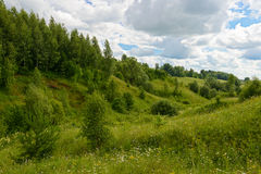 Forêt verte sur les pentes de la colline Photos stock