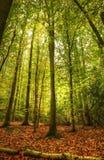 Forêt vibrante colorée renversante d'automne d'automne photos stock