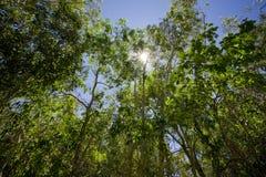 Forêt vibrante verte avec briller du soleil Photographie stock