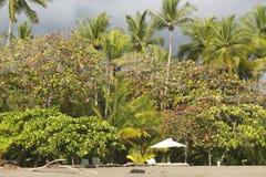 Forêt vide de palmier de Beachwith et présidences vides, Costa Rica Photo stock
