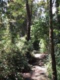 Forêt vierge sauvage de chemins de marche photo libre de droits