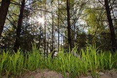 Forêt vivante Photos stock