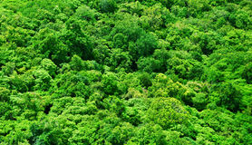 forêts Image stock
