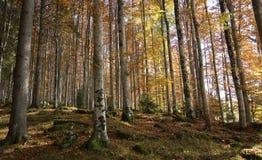 Forêts avec des couleurs Photographie stock