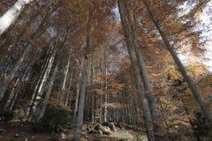 Forêts avec des couleurs d'automne Photographie stock libre de droits