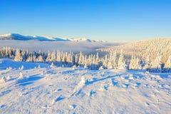 Forêts couvertes de neige Photographie stock libre de droits