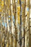 Forêts d'automne Image libre de droits