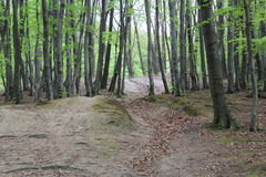 Forêts de beauté Photographie stock