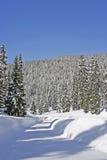 Forêts de neige dans la montagne Photo stock