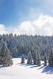 Forêts de neige dans la montagne Photographie stock libre de droits