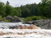Forêts de Nova Scotia Photographie stock libre de droits