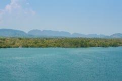 Forêts de palétuvier dans l'océan en Thaïlande Photos libres de droits