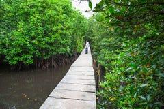 Forêts de palétuvier dans la province Cambodge de kong de KOH images stock