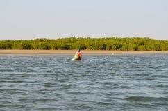 Forêts de palétuvier dans la région de delta de rivière de Saloum, Sénégal, Afrique de l'ouest Photos stock