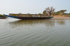 Forêts de palétuvier dans la région de delta de rivière de Saloum, Sénégal, Afrique de l'ouest Photos libres de droits