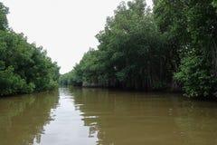 Forêts de palétuvier le long de la rivière Image stock