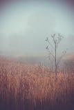 Forêts de prés de paysage d'automne de matin Photo libre de droits
