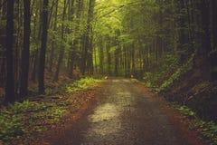 Forêts des Carpathiens Images stock