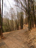 Forêts en bambou Photographie stock