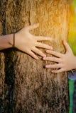 Forêts et arbres d'amour d'arbre d'étreinte de femme de main Image libre de droits