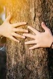 Forêts et arbres d'amour d'arbre d'étreinte de femme de main Photos stock