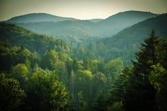 Forêts et collines vertes, lacs Plitvice de parc national, Croatie images libres de droits